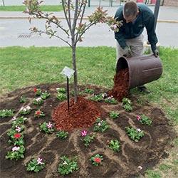 planting-service--250