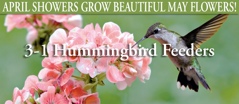 wk18_hummingbirds