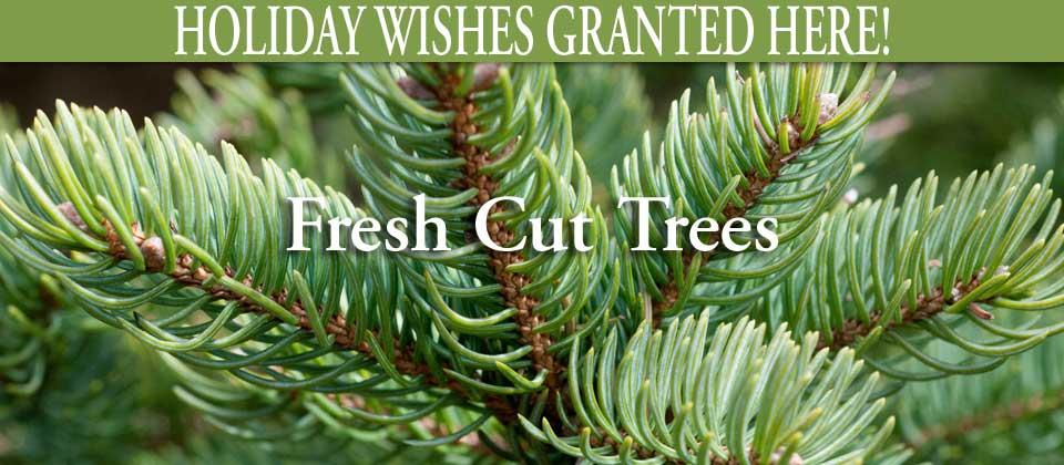 wk47_fresh-trees
