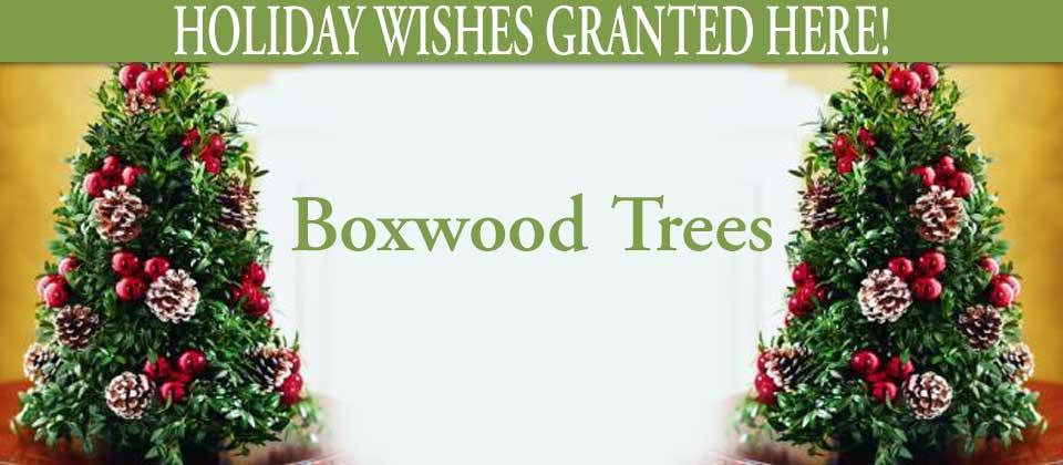 wk50_boxwoodtrees