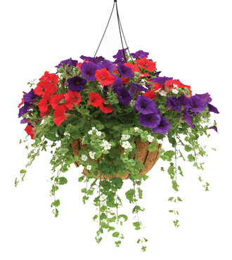 Pw Hanging Basket Combinations Lakeview Nurseries