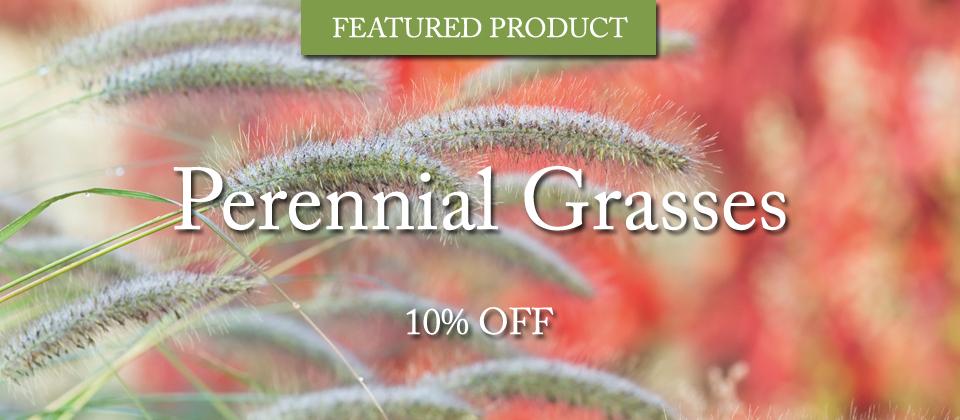 perennial-grass