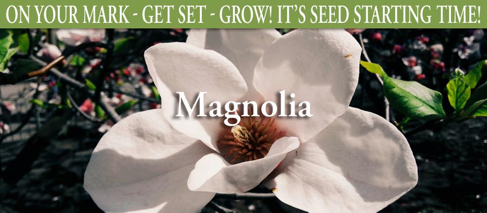 wk13_BF_Magnolia