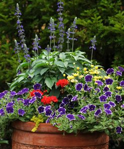 Summer Flowers and Hanging Baskets