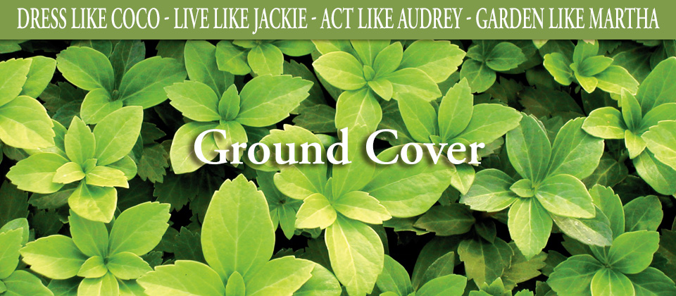 25_GroundCover
