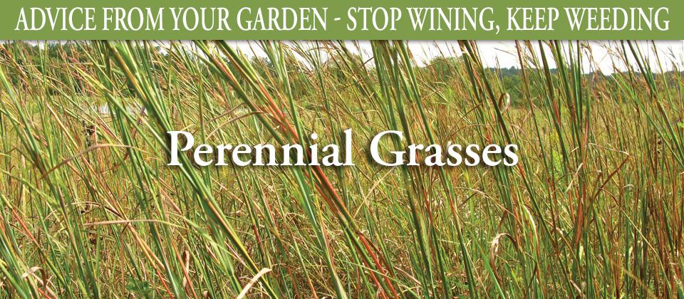 8.12_Perennial-Grasses