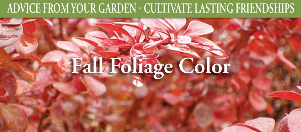9.9_Fall-Foliage-Color