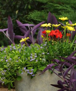 Garden Care and Fertilizers