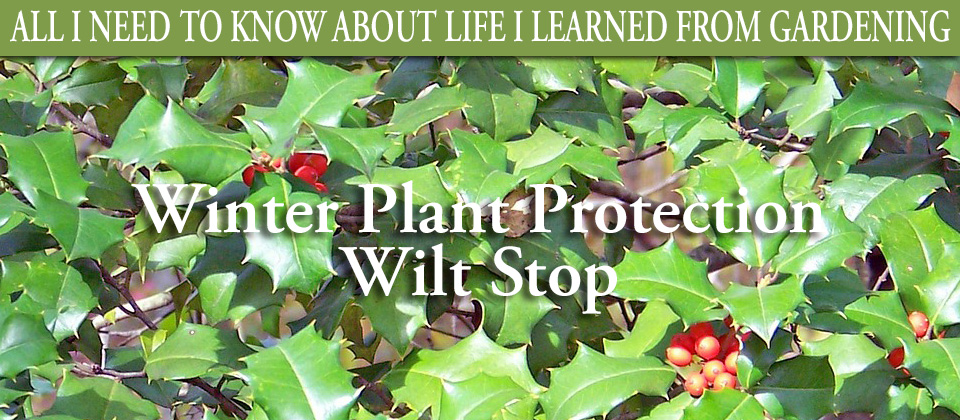 Winter-Plant-PortectionWilt-Stop