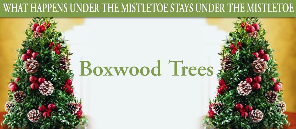122129boxwoodtrees