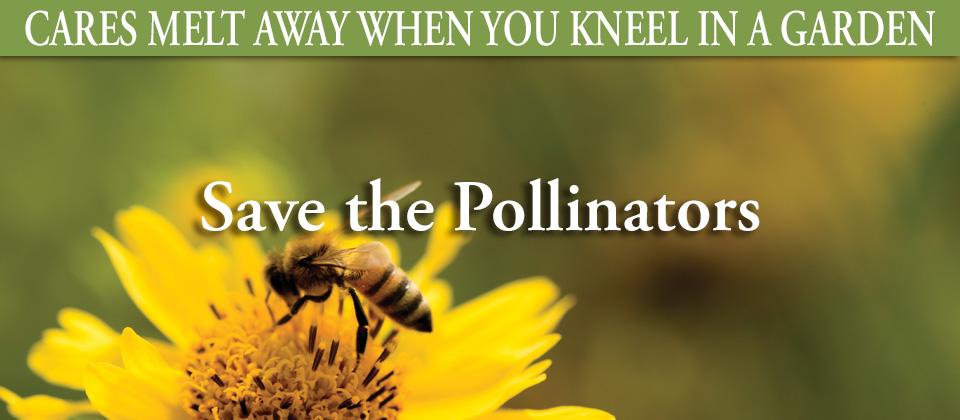 6.30_Pollinators