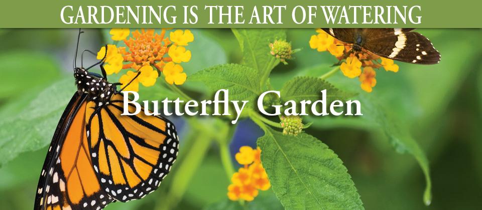 9.8_Butterfly