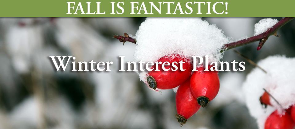 11.10_Winter-Interest-Plants
