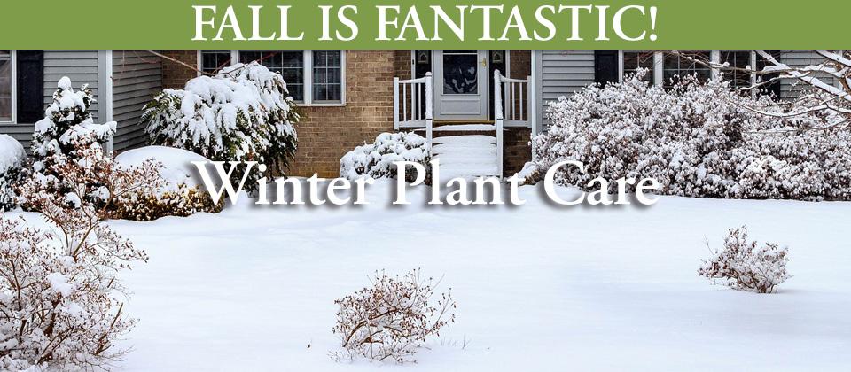 11.10_Winter-Plant-Care