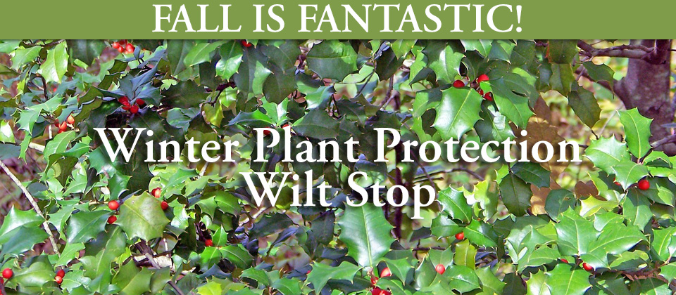 11.10_Winter-Plant-Protection-Wilt-Stop