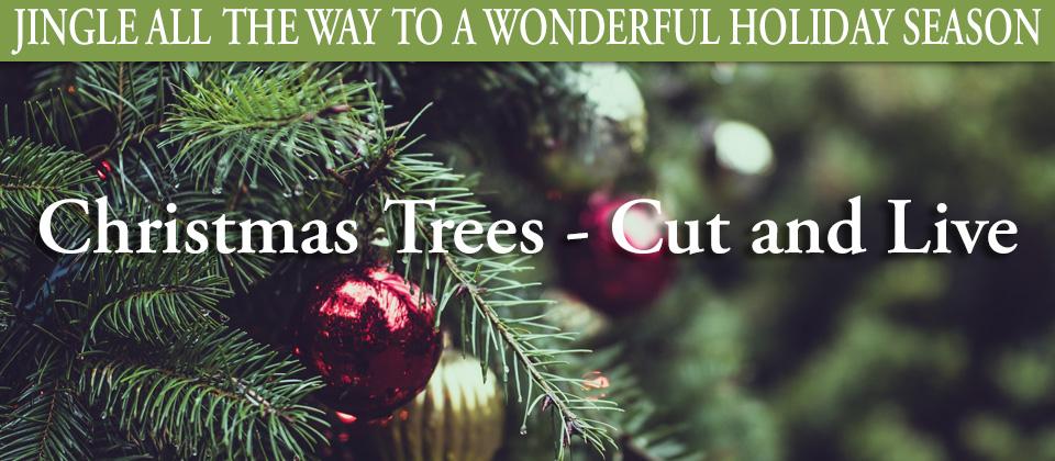 11.17_Christmas-Trees